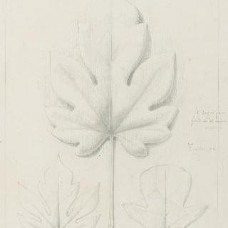 파파야 잎과 무화과나무 잎 습작