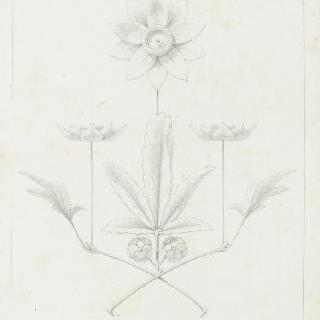 꽃 장식 구성