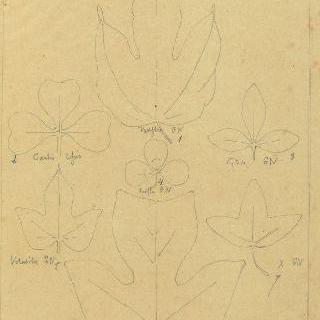 꽃시계 덩굴 잎, 금작화 잎, 클로버 잎, 메꽃과 튤립 잎 습작