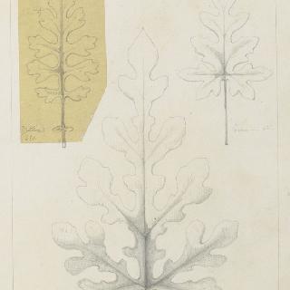 수박 잎, 제라늄 잎 습작