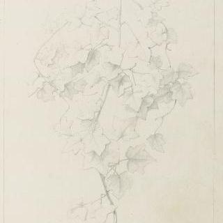 송악 잎 습작