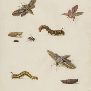습작 종이 : 고치, 애벌레, 파리와 나비들
