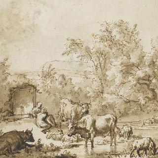 샘 부근의 양떼들