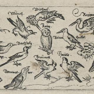 여러가지 새
