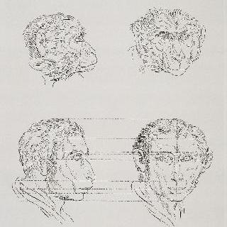 판 11 : 두 원숭이 머리와 원숭이와 관련된 두 인간의 두상