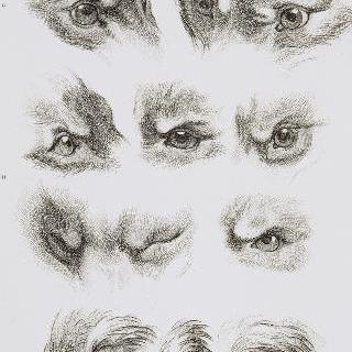 판 36 : 늑대, 여우, 돼지의 눈