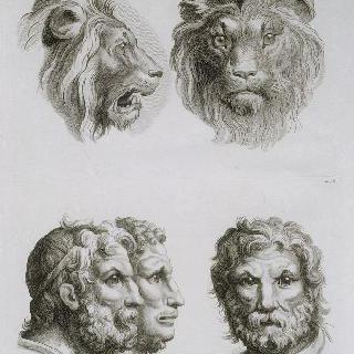 동물의 얼굴과 비교한 인간 얼굴에 대한 습작