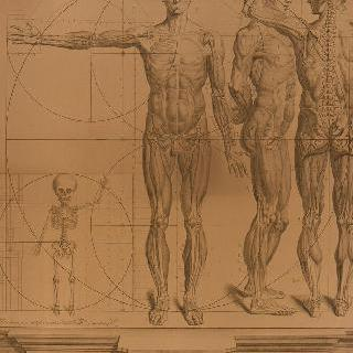 다양한 원근화법으로 묘사된 인체의 여러가지 자세 및 비율