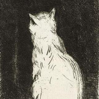 검은 배경 위의 흰 고양이