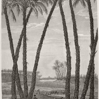 이집트 묘사 : 멤피스