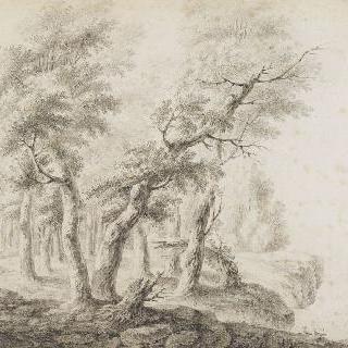 나무가 우거진 풍경