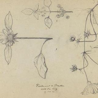 꽃 세가지 습작