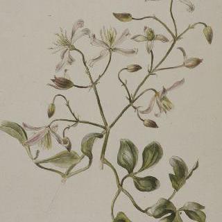 나뭇잎과 꽃 가지