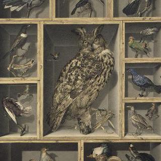 중앙의 이국적인 새들이 있는 정물화 : 다른 새들이 둘러싸고 있는 부엉이 한 마리