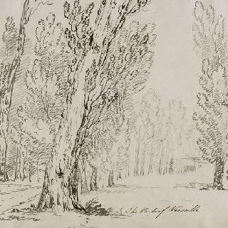 베르사유 공원의 나무들 사이의 오솔길