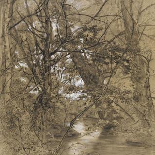 나무와 잎 사이의 개울