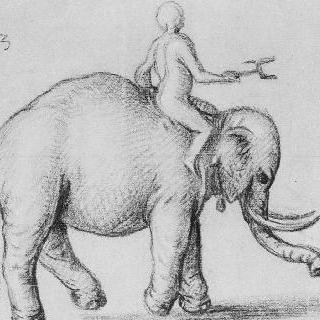 오른쪽으로 가는 코끼리와 그 위에 올라탄 남자
