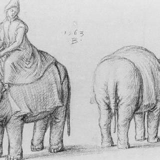 코끼리와 간수 습작 2점