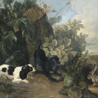 두 마리의 개와 토끼