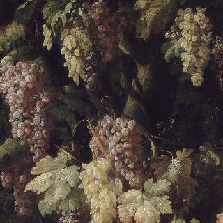 나무 줄기 주위의 포도송이들