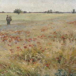 개양귀비밭