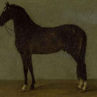 나폴레옹 1세의 말 : 르 트리옴판