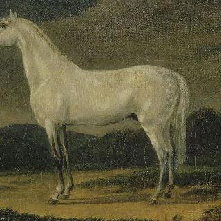 나폴레옹 1세의 말 : 르 비지르