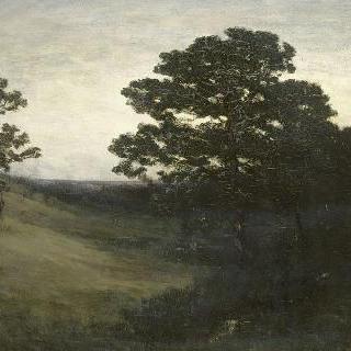 축축한 숲