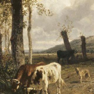 물통의 소들