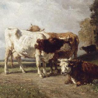 휴식을 취하는 소들