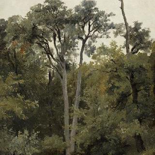 나무가 우거진 풍경 : 샤일리의 바 브레오
