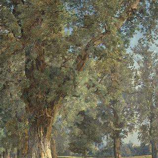 빈의 프라테의 전경 (왼쪽의 나무)