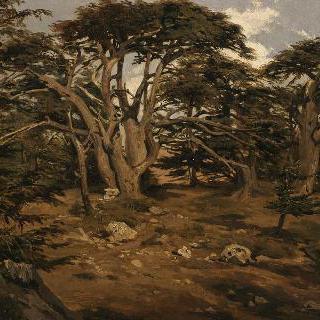 레바논 산 위의 오래된 서양삼 나무들
