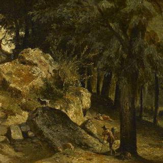 크레피 앙 발루아 부근의 숲