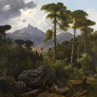발도니엘로의 숲