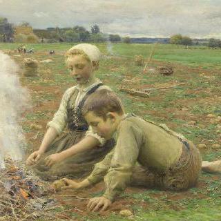 감자 수확