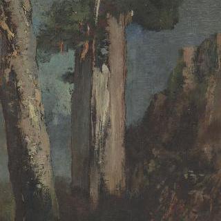 비에브르 지방의 자작나무들