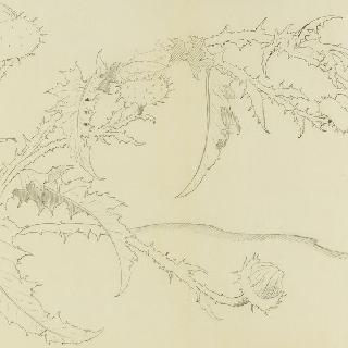 꽃장식 구성의 스케치