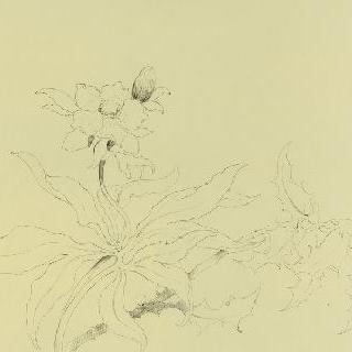 꽃장식 모델