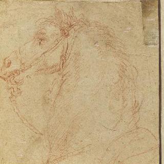 말의 머리와 목, 왼쪽 옆모습