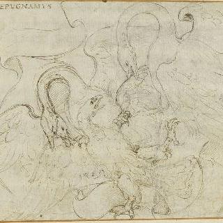 독수리와 싸우는 두 마리의 백조