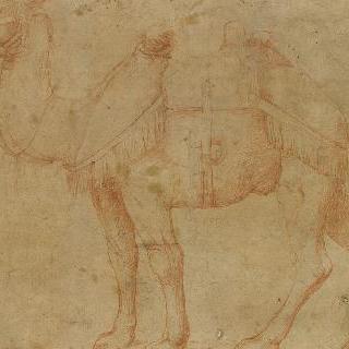 왼쪽으로 몸을 돌린 낙타
