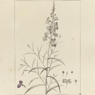 셀스 정원의 식물