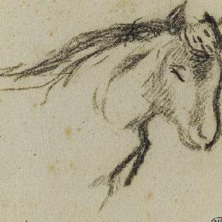말의 크로키, 오른쪽 옆모습
