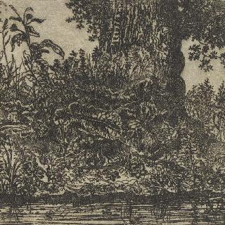 큰 나무 줄기가 있는 풍경