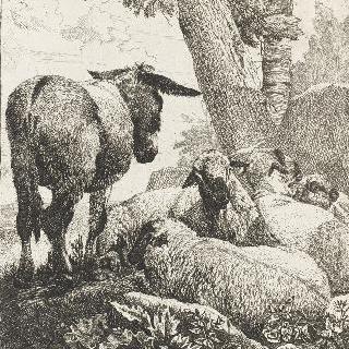 다양한 동물들