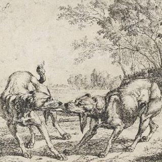 고깃덩어리를 물고 싸우는 개들