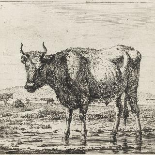 물가의 소