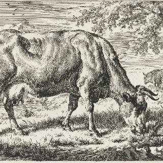 암소와 두 마리의 양
