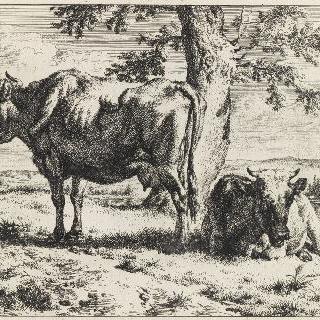 나무 아래의 두 마리의 암소들